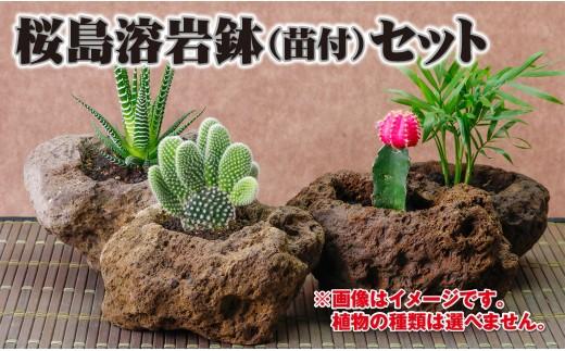 A1-2273/桜島の溶岩でつくった植木鉢 3個