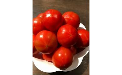 ≪2019年春お届け≫ 美味しいトマト 4Kg