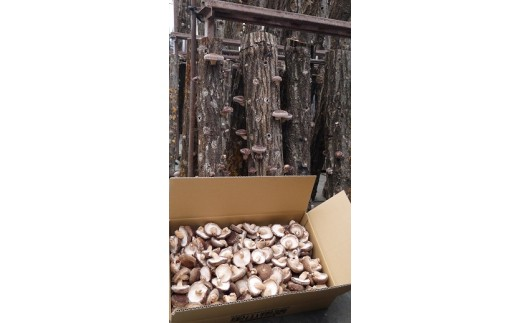 (468) 原木栽培生椎茸バラ詰2kg