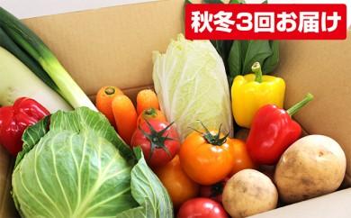 [№5773-0088]熊本県合志の秋お野菜定期便 3回コース