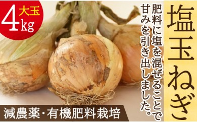 肥料にこだわった「塩玉ねぎ」 大玉 約4kg (新玉ねぎ) 長崎県産