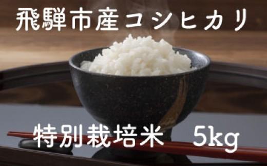 食味コンクール受賞農家の特別栽培米コシヒカリ5kg[A0016]