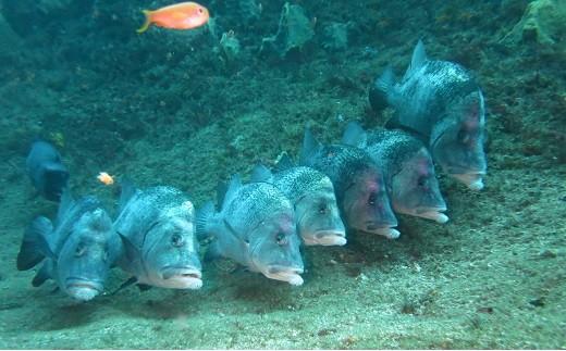館山の海で色々な魚たちと遭遇
