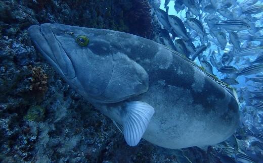 大きな魚から小さな魚まで種類が豊富