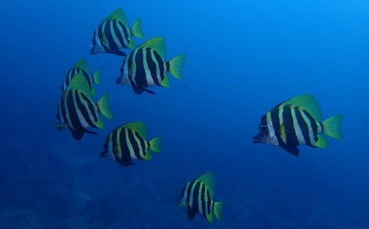 カラフルな魚が見られることも