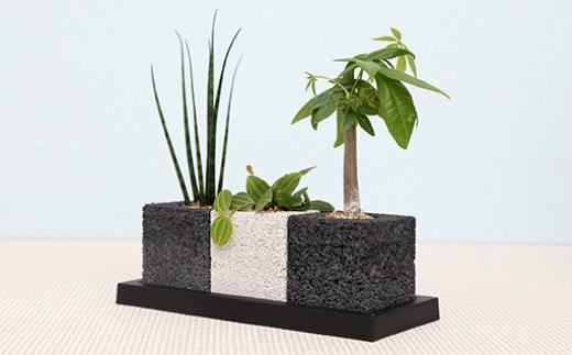 eco-pochi 世界初の消集グリーン 観葉植物