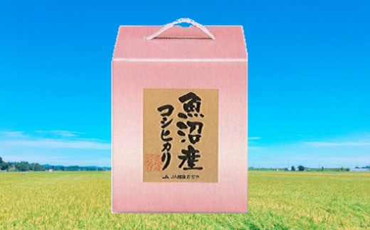 【B3001】魚沼産コシヒカリ5kg(化粧箱入)