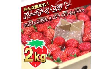 武下さんちのあまおう 一口サイズ パーティーセット1kgx2ケース!