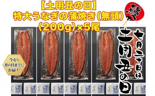 C3-0807/【土用の丑までにお届け】鹿児島県産特大うなぎの蒲焼き(無頭)200g×5尾