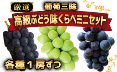 [№5745-1075]【数量限定】葡萄三昧 高級ぶどう 味くらべ ミニセット