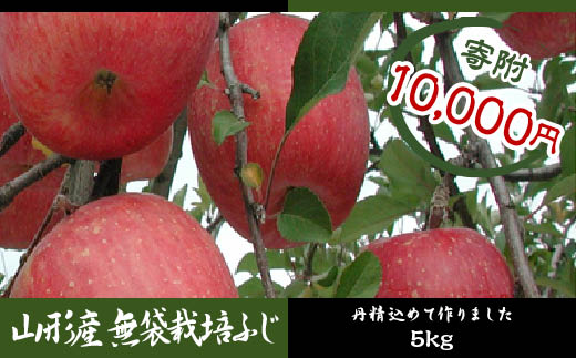 FY18-439 山形産 無袋栽培ふじ 5kg (16玉~20玉)