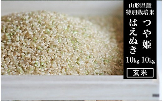 FY18-528 【山形県産2銘柄食べ比べ】 つや姫・はえぬき 玄米各10kg