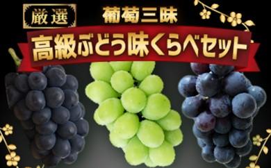 [№5745-1076]【数量限定】葡萄三昧 高級ぶどう 味くらべセット