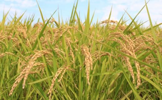 A-7 特別栽培米「ミルキークイーン」白米5㎏