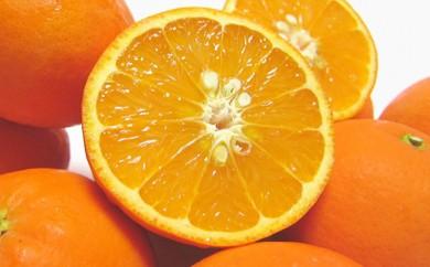 [№5745-1095]厳選!!爽快セミノールオレンジ 16kg(8kg×2箱)
