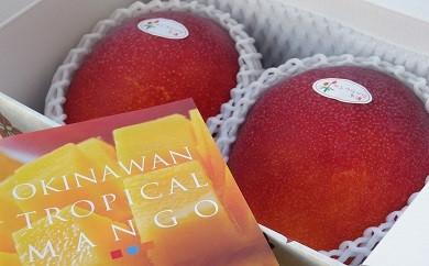 サンフルーツ糸満のマンゴー 約1kg