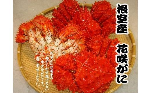 CA-69002 【北海道根室産】花咲ガニ3尾(計1.2kg以上)[405504]