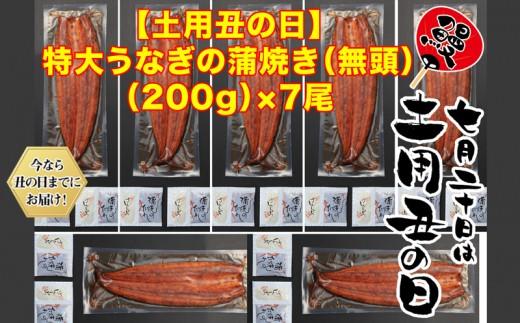D4-0809/【土用の丑までにお届け】鹿児島県産特大うなぎの蒲焼き(無頭)200g×7尾