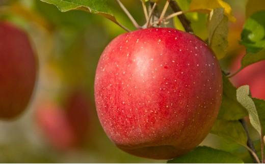 [№5564-0001]樹上完熟葉とらずりんご 約5kg