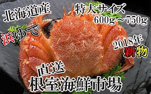 CA-57009 北海道産浜茹で毛がに600~750g×1尾[431787]