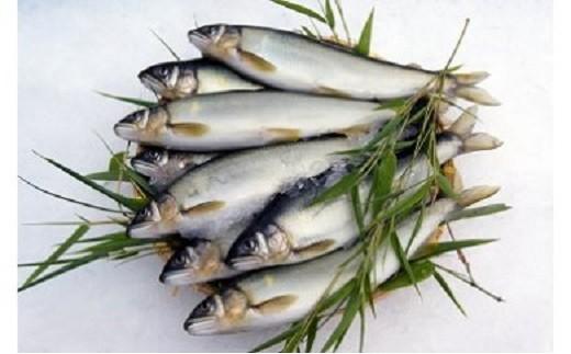 C【425-172】 近江鮎(鮮魚1kg・約10尾入り)