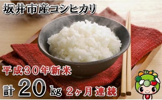 [B-0101] 【2ヶ月連続お届け】 平成30年新米 坂井市産コシヒカリ 10㎏×2回 計20㎏