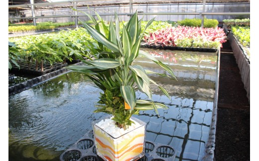 B1 観葉植物(カラーペットブロック15)
