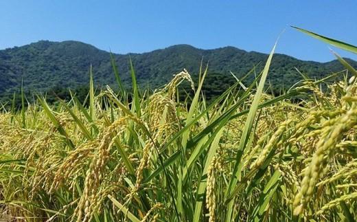 石垣島には沖縄県最高峰である於茂登岳(525.5m)があるほか、山も多く、水に恵まれた環境となっています。
