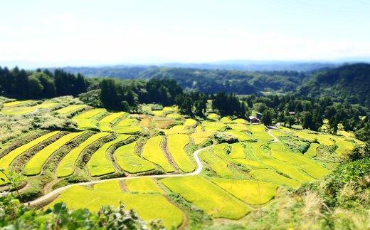 ここが外之沢棚田です。ここで採れたお米を食べてみませんか?