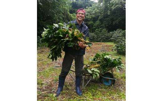 伊仙町地域おこし協力隊とコーヒーの森のお手入れ体験