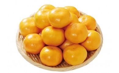 ≪和歌山県産≫極上の後味!「樹上完熟みかん」5kg