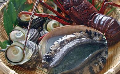 『天然ものは、最高級のステータス!』天然活魚おまかせセット