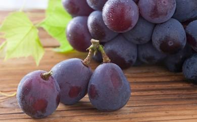 [№5735-0264]フルーツ王国 岡山のブドウセット