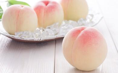 [№5735-0265]【数量・期間限定】フルーツ王国 岡山の白桃