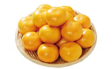≪和歌山県産≫後味までしっかり濃い!「樹上完熟みかん」10kg