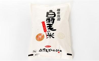 農家直送!魚沼産黄金もち 「白羽毛の米」5kg