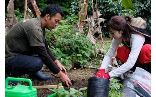 伊仙町地域おこし協力隊とコーヒーの苗作り体験