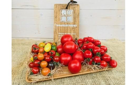 おいしいトマトが始まる10月からの3か月定期便