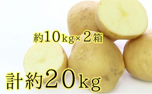 [№5834-0161]雪蔵じゃがいも約10kg×2(サイズL、品種:とうや)