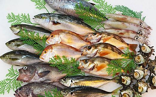 744.季節の鮮魚セット年6回コース