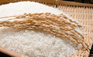 [№5810-0220]平成30年産新米 きぬむすめ 10kg 無洗米