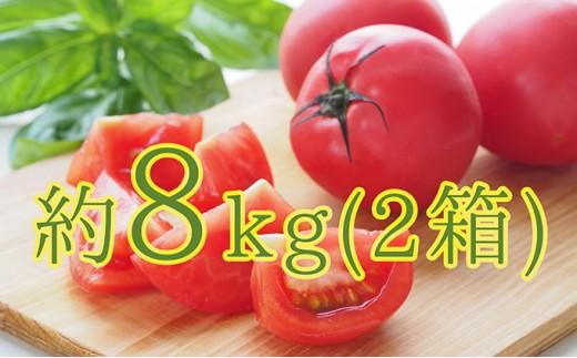 [№5724-0163]<2018年7月上旬からお届け>壮瞥町「FARM K」の美味しいトマト 約8kg(2箱)