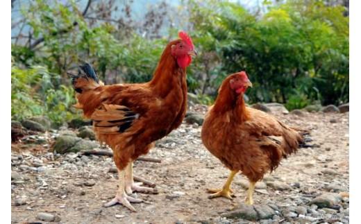 A-1-17 <黒岩土鶏(丸ごと1羽分)>1か月以内に順次出荷
