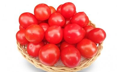 [№5661-0099]ミディアムフルーツトマト ※クレジット決済限定