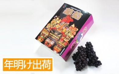 [№5898-0063]【年明】贈答用スチューベン約2kg 化粧箱入 青森県産