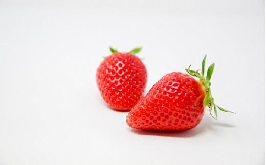 果実は大きい円錐形で、果皮は橙色に近い赤色が特徴です。