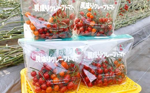B)房成りグレープトマト(ミニトマト)3kg