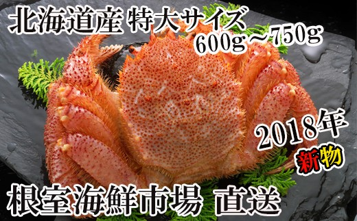 CA-42011 北海道産浜茹で毛がに600~750g×1尾[430350]