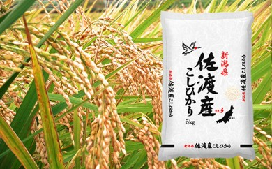 [№5702-0140]平成29年産 新潟県佐渡産こしひかり10kg(5kg×2袋)