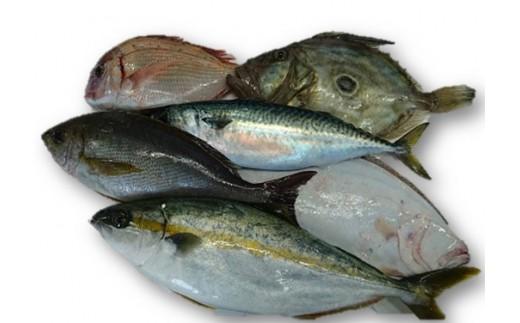 A0901 鮮魚セットA